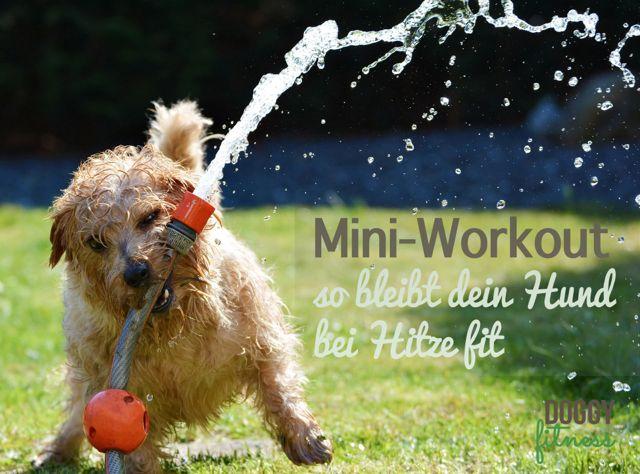 Mini-Workout – 3 einfache Übungen, mit denen dein Hund auch bei Hitze fit bleibt