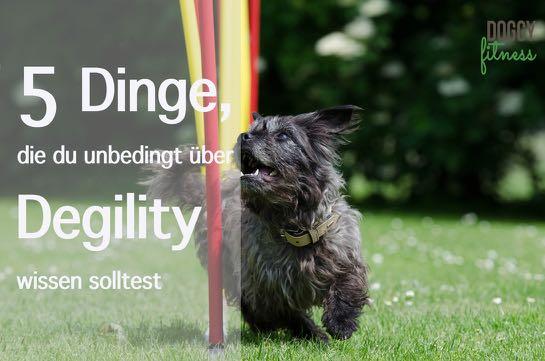 5 Dinge, die du unbedingt über Degility wissen solltest! – midoggy Blogparade