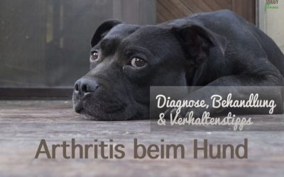 Arthritis beim Hund – Diagnose, Behandlung & Verhaltenstipps
