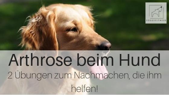 Arthrose beim Hund - diese 2 Übungen helfen ihm, für mehr Beweglichkeit und bessere Muskulatur