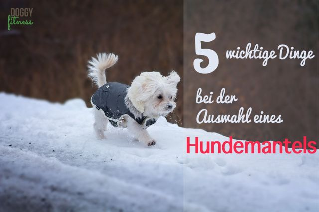 Diese 5 Punkte solltest du bei der Auswahl eines Hundemantels unbedingt beachten