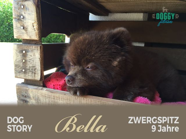 Dog Story 3 Bella – Rehabeginn nach dem Kreuzbandriss
