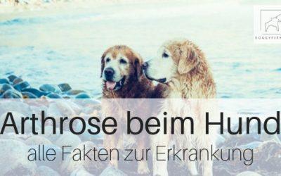 Arthrose beim Hund – hier erfährst du, was das bedeutet