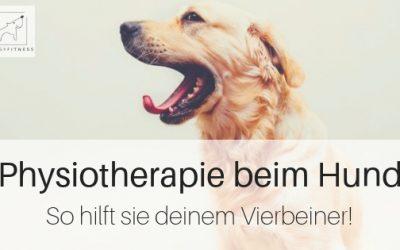 Physiotherapie beim Hund – so hilft sie deinem Vierbeiner
