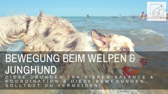 Bewegung von Welpen & Junghunden – Übungsideen für Balance & Koordination & welche Bewegungen tabu sind!