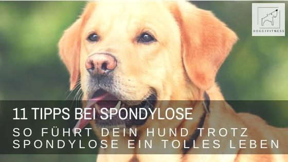 11 wertvolle Tipps – so führt dein Hund trotz Spondylose ein tolles Leben