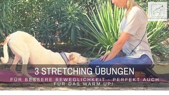 3 Stretching Übungen für deinen Hund – perfekt auch für das Warm Up