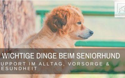 5 extrem wichtige Dinge beim alten Hund