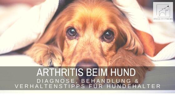 Arthritis beim Hund ist eine entzündliche Gelenkerkrankung, die unbehandelt zum Tod führen kann. So wird sie diagnostiziert und behandelt.