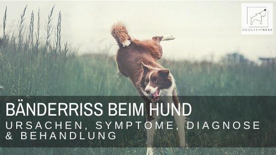 Bänderriss beim Hund – Ursachen, Symptome, Diagnose & Behandlung