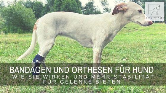 Bandagen und Orthesen für Hunde – wie sie wirken und mehr Stabilität für Gelenke bieten