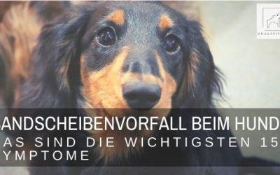 Diese 15 Symptome beim Bandscheibenvorfall beim Hund solltest du kennen!