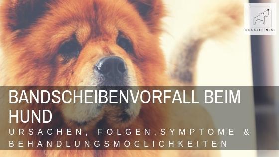 Bandscheibenvorfall beim Hund - Ursachen, Folgen, Symptome & Behandlung