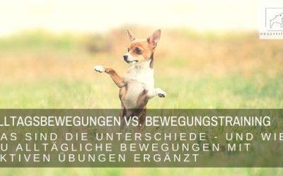 Alltägliche Bewegung vs. Bewegungstraining beim Hund – das sind die Unterschiede