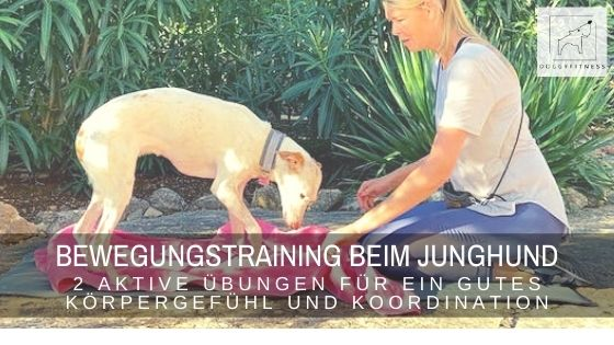 Bewegungstraining beim Junghund – 2 aktive Übungen für ein gutes Körpergefühl und Koordination