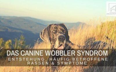 Das Canine Wobbler Syndrom – Entstehung, betroffene Rassen & Symptome