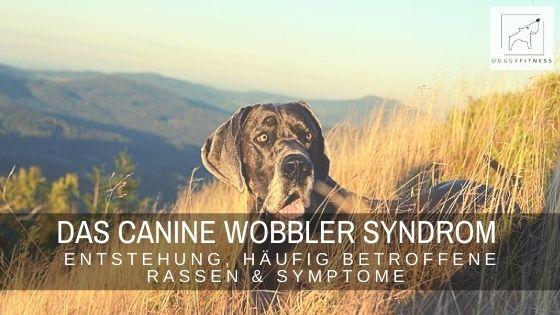 Das Canine Wobbler Syndrom ist eine Erkrankung der Halswirbelsäule. Erfahre alles zur Entstehung, Symptome & häufig betroffenen Rassen.