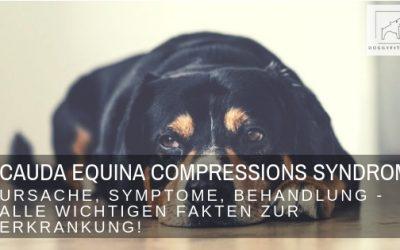 Cauda Equina Compressions Syndrom – was es für deinen Hund bedeutet