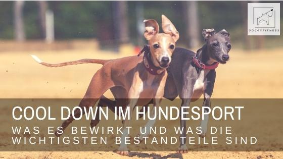 Wirkungsvolles Cool Down beim Sporthund