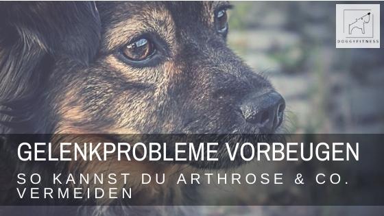 Was kannst du tun um Gelenkprobleme beim Hund zu vorzubeugen? Vorsorge ist wichtig. Daher erfährst du hier wichtige Tipps zur Prävention!