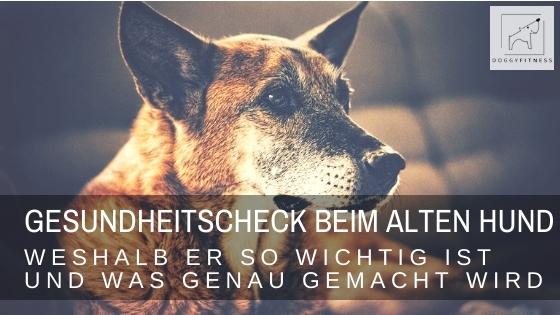 Gesundheitscheck für ältere Hunde – was gemacht wird und weshalb er unverzichtbar ist