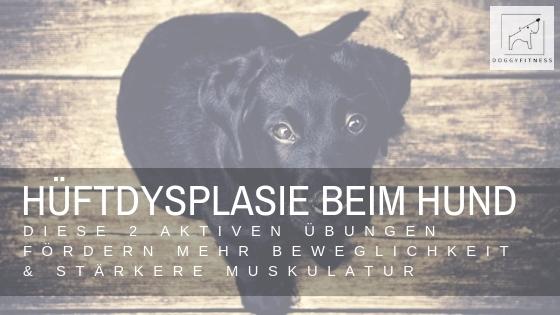 Hüftdysplasie beim Hund - diese beiden Übungen helfen!