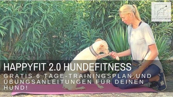 HAPPYFIT 2.0 Hundefitness – gratis 6 Tage-Trainingsplan und Übungsanleitungen für deinen Hund!
