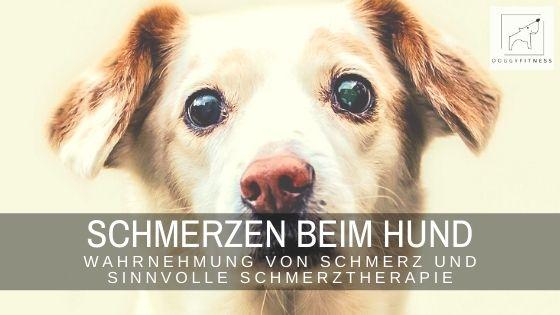 Leidet ein Hund unter Schmerzen, ist eine Schmerztherapie unverzichtbar. Erfahre hier, wie sie aussehen kann und was du selbst tun kannst.