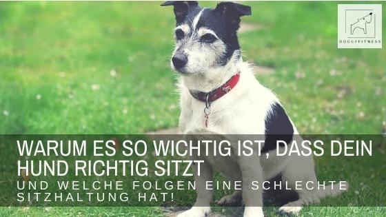 Kann dein Hund Sitz? - erfahre hier, wie wichtig es ist, dass dein Hund sich richtig hinsetzt, um Gelenkprobleme zu vermeiden!