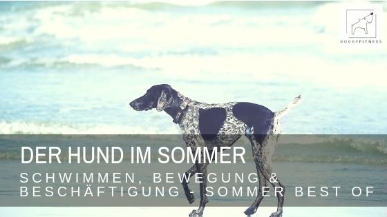 Der Hund im Sommer – Schwimmen, Bewegung & Beschäftigung – Sommer Best Of