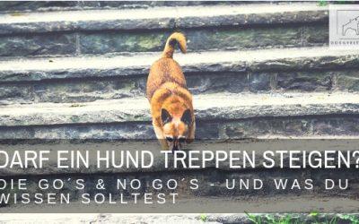Dürfen Hunde Treppen steigen? – das sind die Go´s & No Go´s!