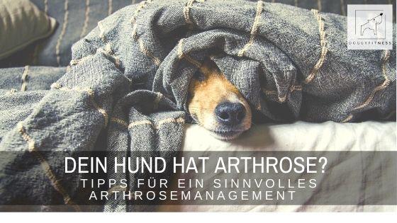 Dein Hund hat Arthrose? Tipps für ein sinnvolles Arthrosemanagement!