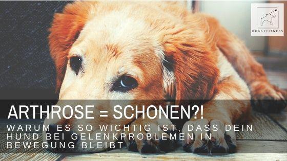 Man denkt es sei das Mittel der Wahl, den Hund bei Arthrose & Co. zu schonen. Erfahre hier, warum Bewegung trotzdem wichtig ist und wie sie aussehen sollte.