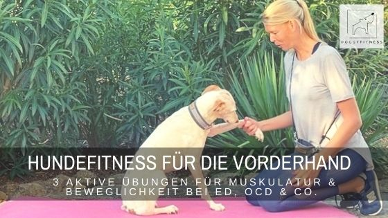 Hundefitness für die Vorderhand deines Hundes – 3 aktive Übungen für Muskulatur und Beweglichkeit