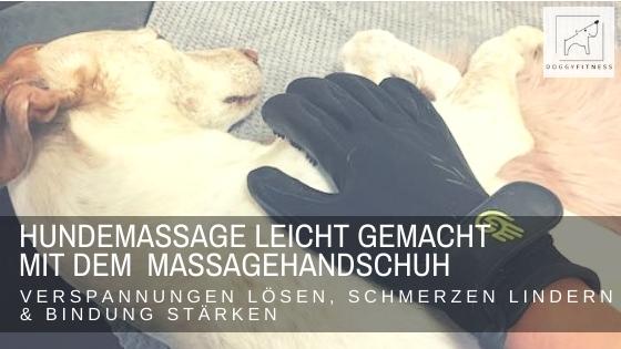 Hundemassage leicht gemacht mit dem Massagehandschuh – Anleitung für Hundehalter