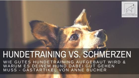 Wie gutes Hundetraining aufgebaut wird und warum es wichtig ist, dass es deinem Hund dabei gut geht! – Gastartikel von Anne Bucher
