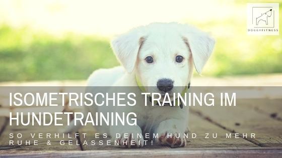 Isometrisches Training im Hundetraining kann eine tolle Unterstützung sein, dem Hund Sicherheit und Ruhe zu geben und damit er in sein Gleichgewicht kommt.