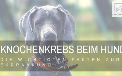 Knochenkrebs beim Hund – alle Fakten zur Erkrankung
