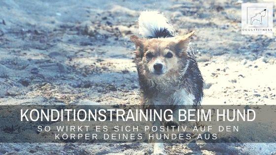 Konditionstraining tut jedem Hund gut: Ein gutes Training zur Förderung von Ausdauer und Kondition ist nicht nur für Sporthunde sinnvoll.