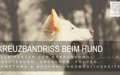 Kreuzbandriss beim Hund – alles was du wissen musst!