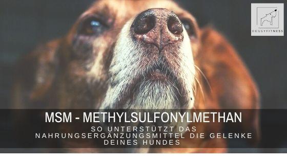 Methylsulfonylmethan – MSM – Nahrungsergänzungsmittel für die Gelenke deines Hundes