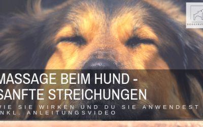 Du möchtest deinen Hund massieren? So gehts – Streichungen (incl. Video)