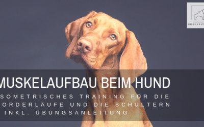 Muskelaufbau Hund: Isometrisches Training der Vorderläufe & Schultern