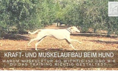 Kraft- und Muskelaufbau beim Hund – warum Muskulatur so wichtig ist und wie du das Training richtig gestaltest