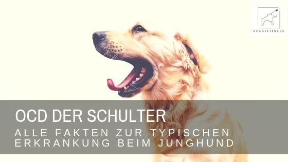 OCD der Schulter beim Hund
