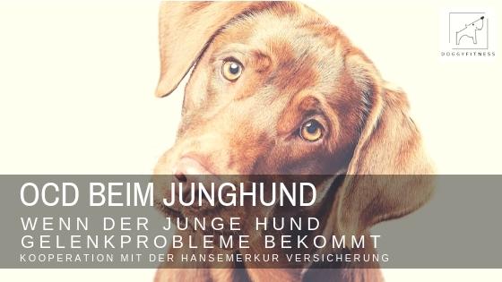 OCD  beim Junghund – wenn der junge Hund Gelenkprobleme bekommt
