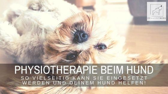 Physiotherapie beim Hund – so vielseitig kann sie eingesetzt werden!