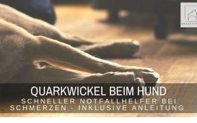 Quarkwickel beim Hund – schneller Notfallhelfer bei Schmerzen und Co.