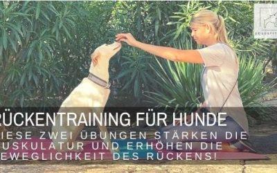 Rückentraining für Hunde – mit diesen zwei Übungen stärkst du die Muskulatur und förderst die Beweglichkeit