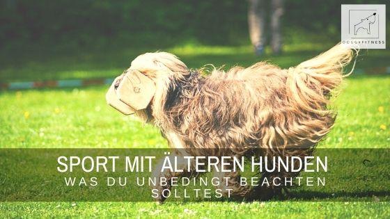 Sport mit älteren Hunden - geht das?! Natürlich, aber es gibt einige wichtige Punkte zu beachten, damit du deinem Hund nicht schadest.